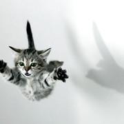 Алексей Максимов on My World.
