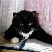 Кот Ученый on My World.